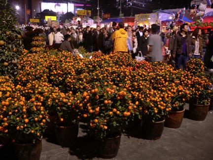 Small orange trees on sale