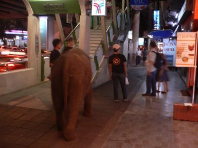 Yup, that's an elephant!