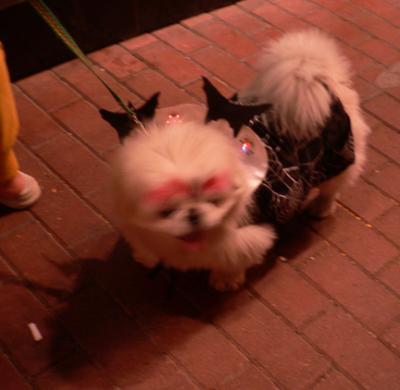Dog in full costume