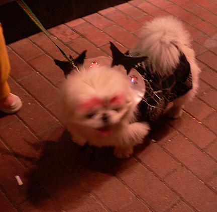 hong-kong-halloween-party-hk-zuma-alive-not-dead